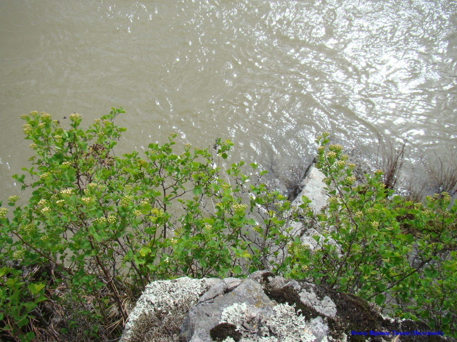 Весенние блики. Река Катунь.