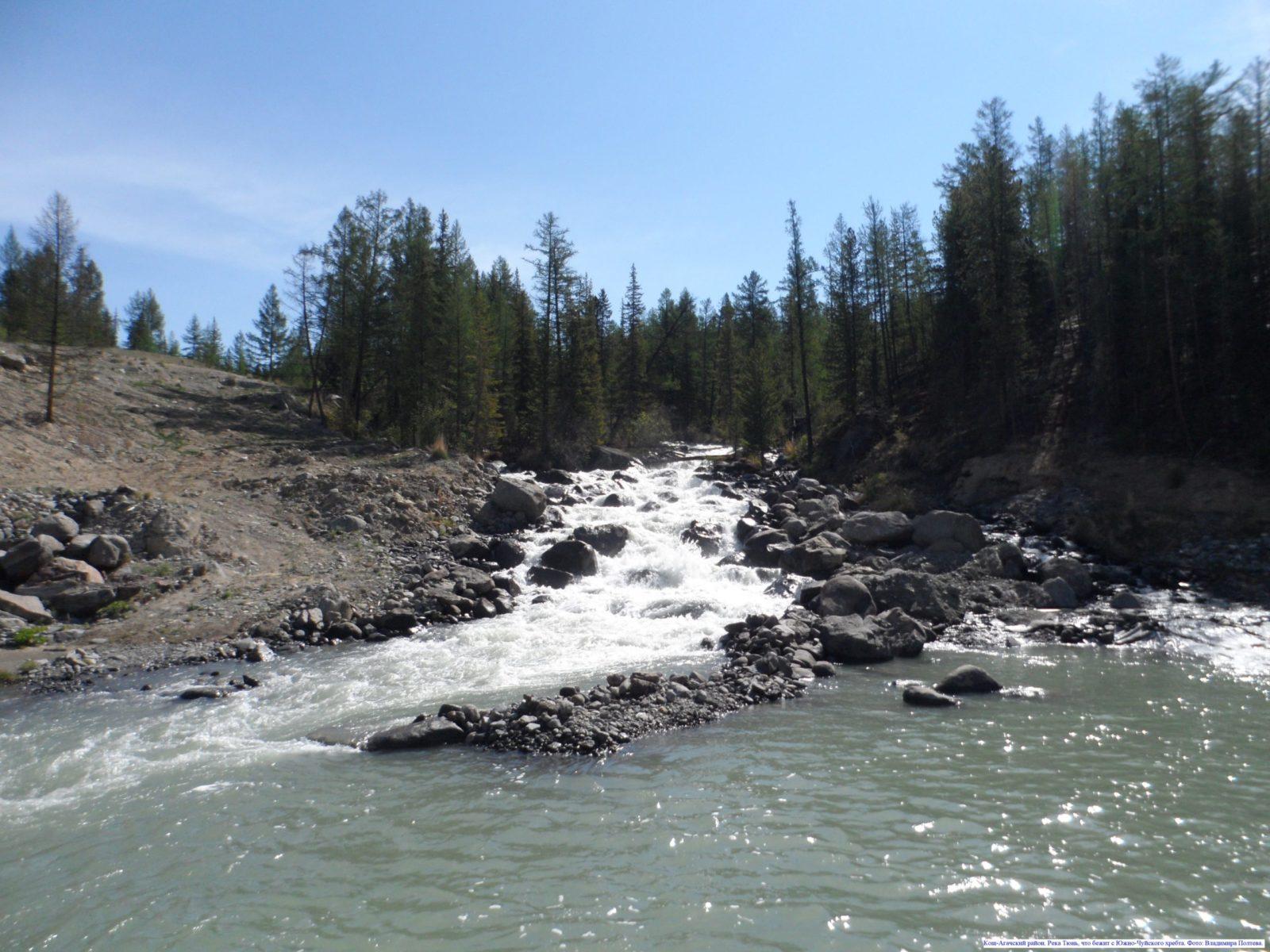 Кош-Агачский район. Река Тюнь, что бежит с Южно-Чуйского хребта.