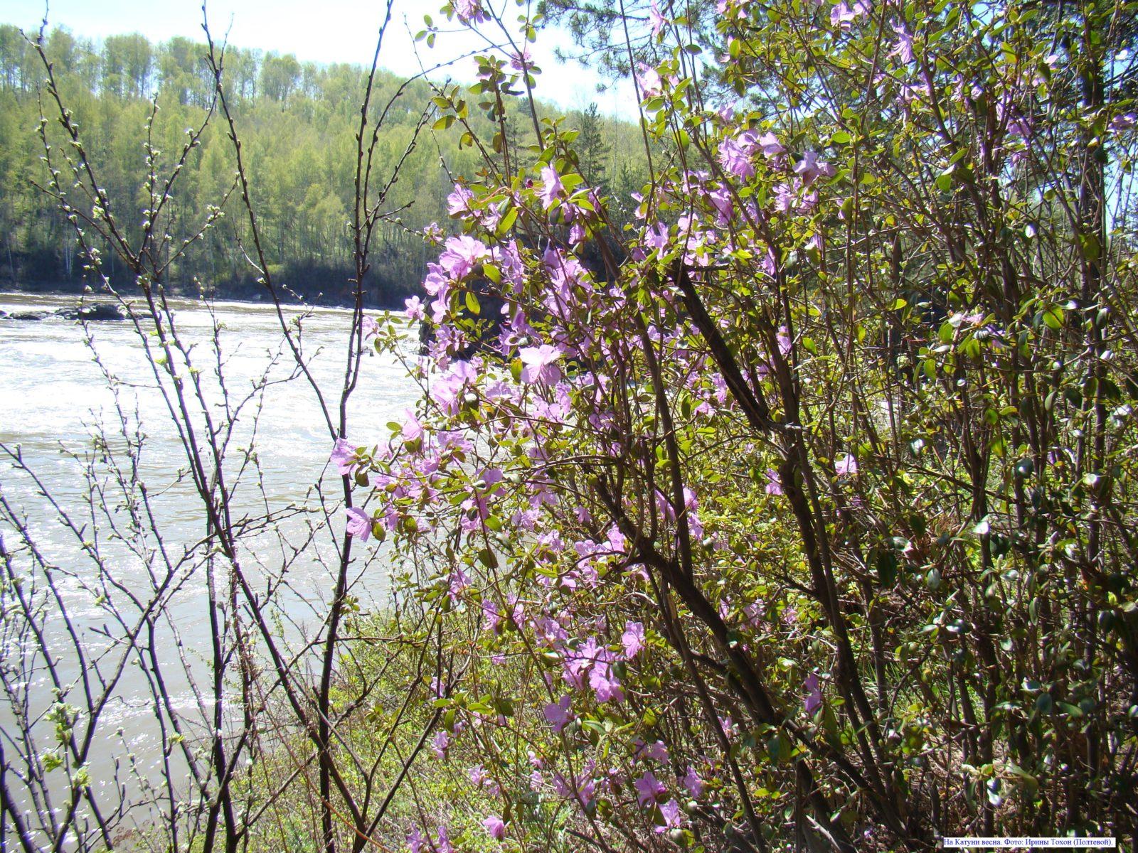 На Катуни весна.