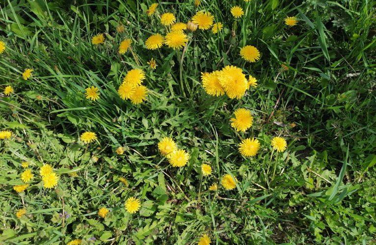 Лекарственные растения Алтая по признакам воздействия