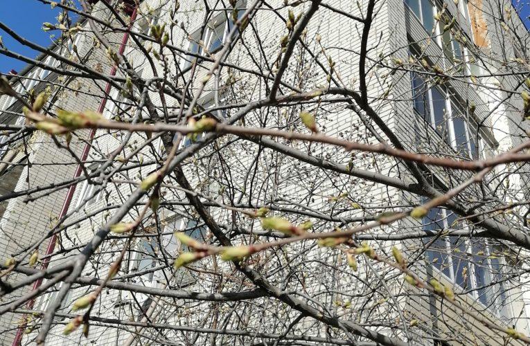 Апрель — водолей, цветень. Народный календарь