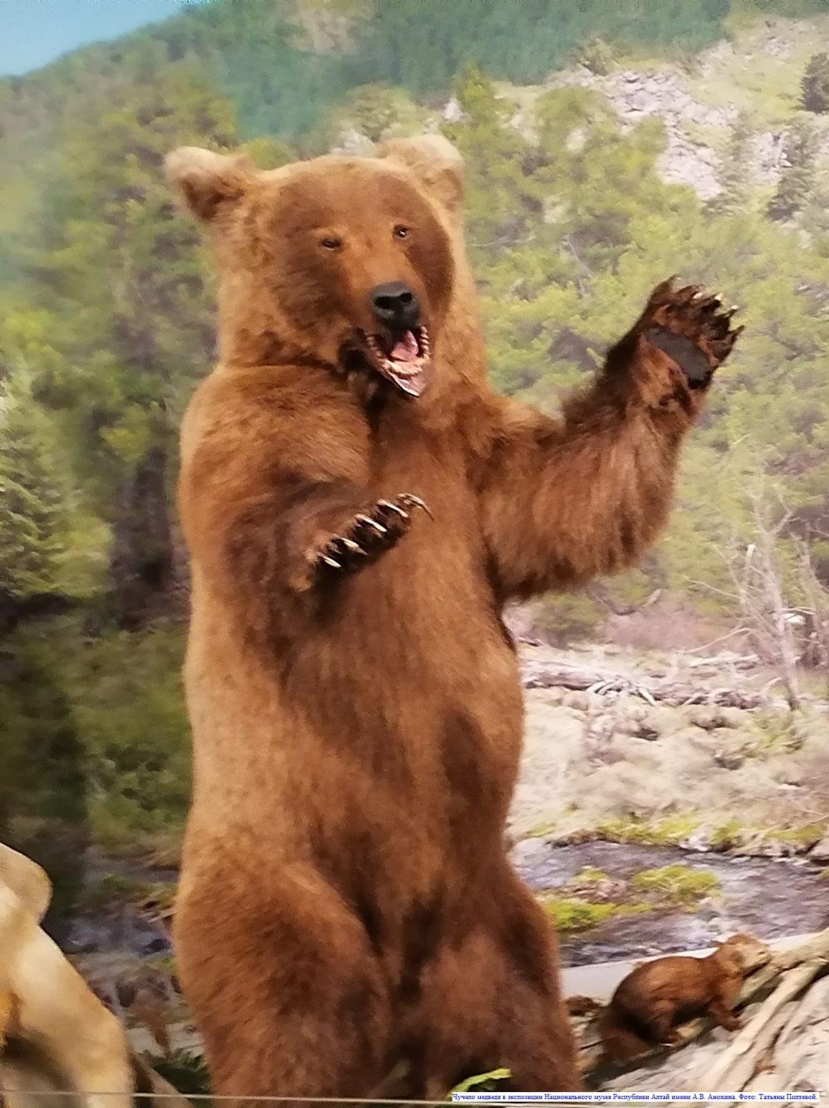 Легенды и мифы Алтая. О медведе