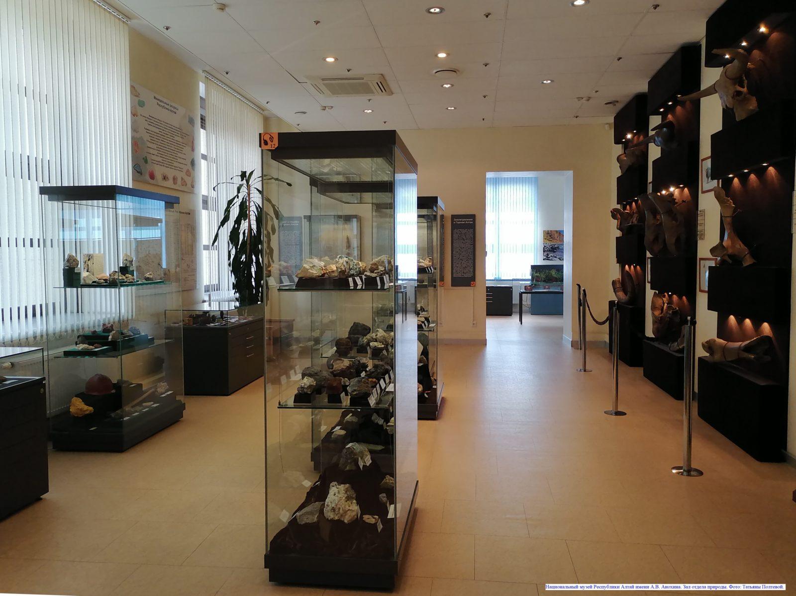 Национальный музей Республики Алтай имени А.В. Анохина. Зал отдела природы.